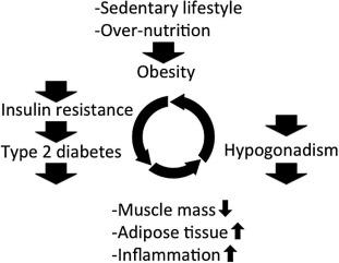 testosterona ciclo vicioso